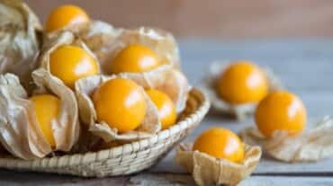 Rasbhari fruit is a blessing for diabetics, and we are about to tell you why