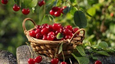 डायबिटीज है तो मिठास से दूरी क्यों, इन रसीले फलों को करें आहार में शामिल